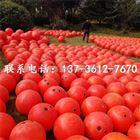 河道警示用什么橙色塑料浮球